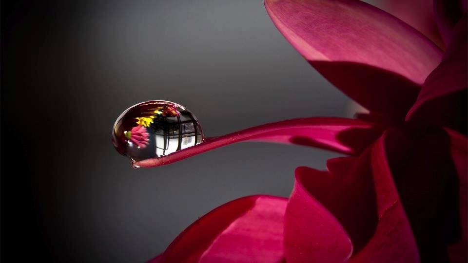Роса на цветке картинки 6