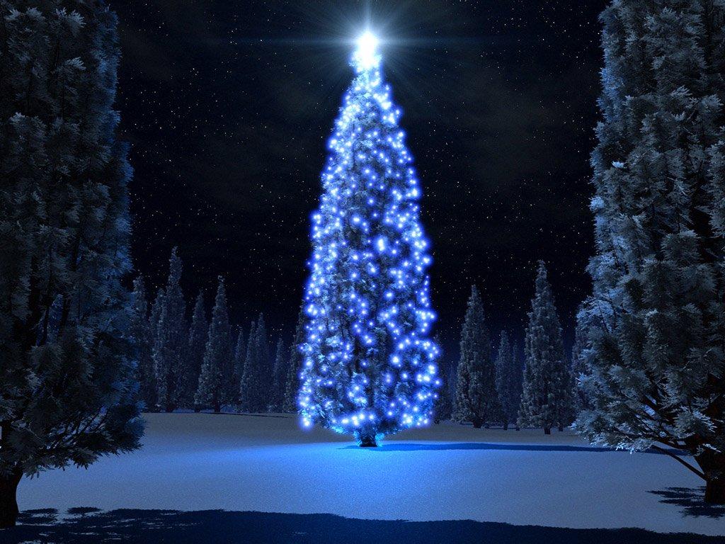 Weihnachtsbaum Der Guten Wünsche.Forum Weihnachtsbaum Der Guten Wünsche