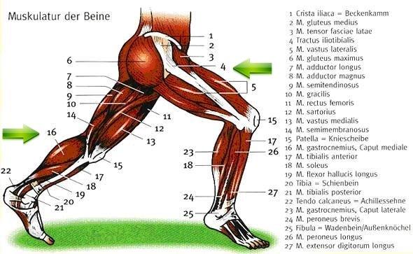 """Beinmuskelschmerzen brauche Hilfe... Brennender…"""" - Frage"""